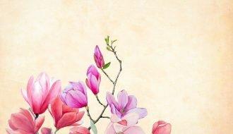 cadeau-fleurs