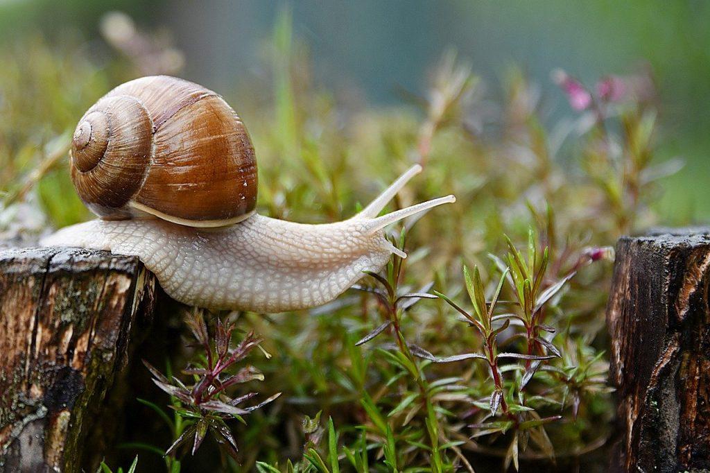 escargot-bave-cosmetique