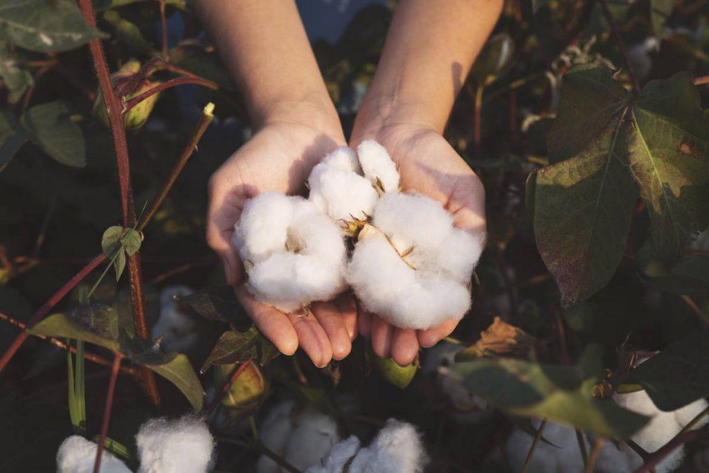 Porter du lin ou du coton bio, quelle différence ?