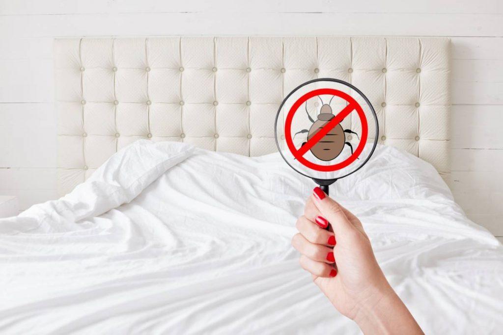 Quelles solutions pour lutter contre les punaises de lit ?