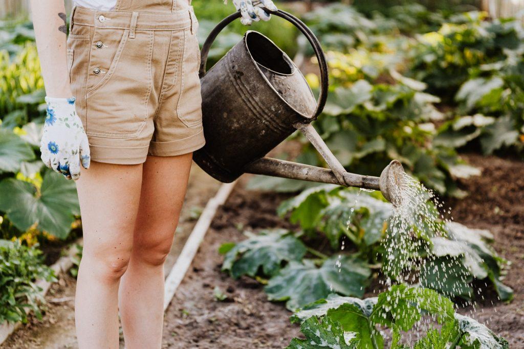 Comment faire un potager en permaculture ?