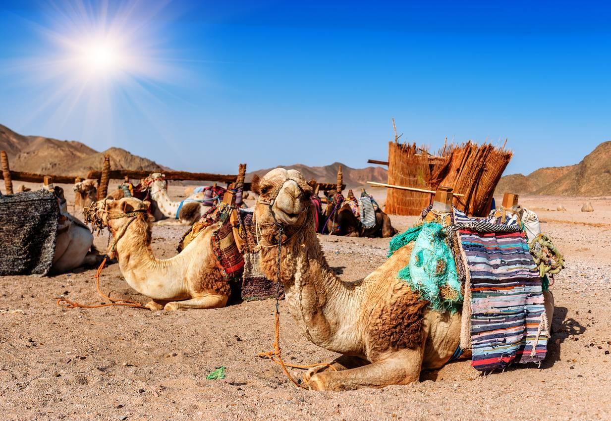 safari désert Dubaï